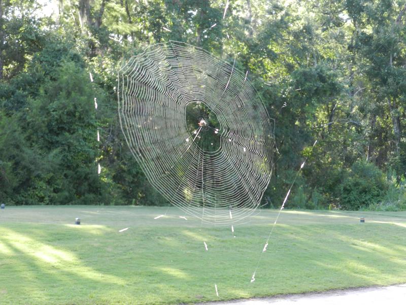 SpiderThree